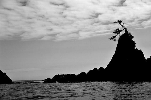 West Coast Natural Bonsai Tree