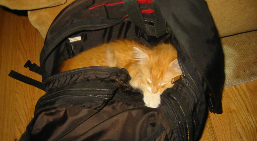 20080418 - hanging out - 154-5456 - Oranjello in Mark's backpack