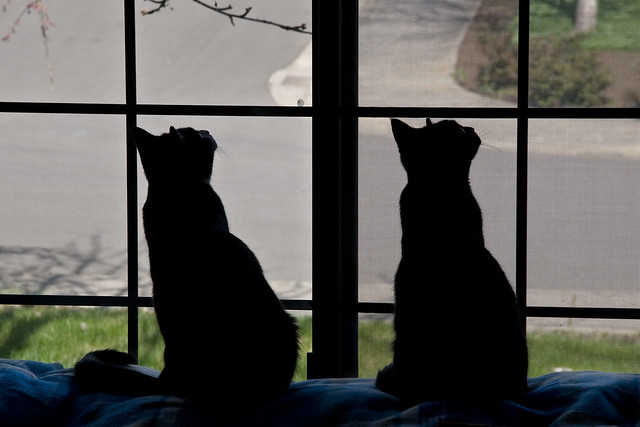 Minnie and Remi Silhouette