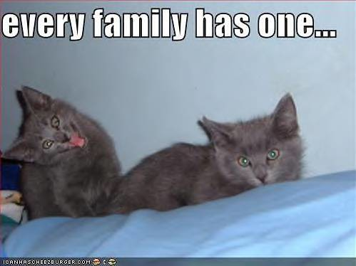 funny-pictures-grey-kittens-crazy-face-family