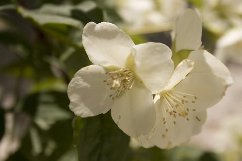 Flor Alcudia de Monteagud (III)