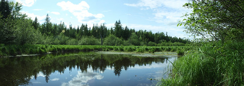 panorama swamp bog photostitch panograph penobscotcounty mattamiscontismaine