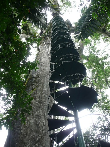 Stairs to the canopy, Manu - Peru 2007