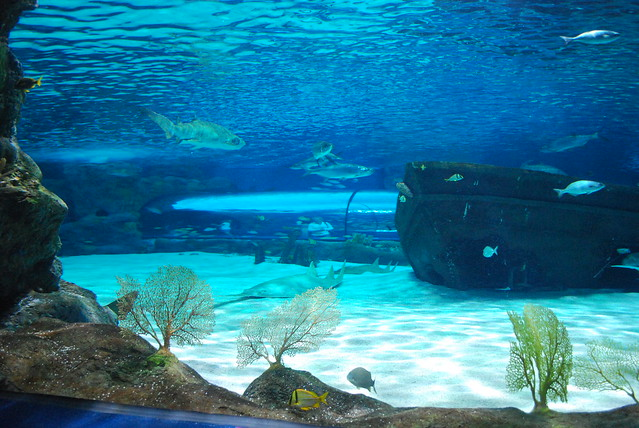 Ripleys Myrtle Beach Aquarium Flickr Photo Sharing