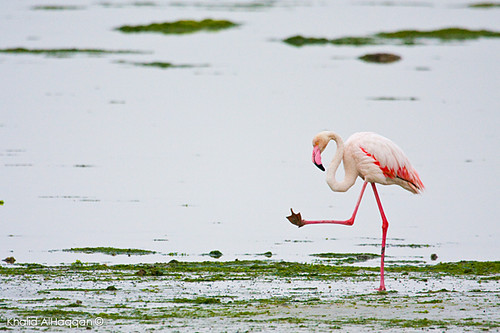 Angry flamingo | Flickr - Photo Sharing!