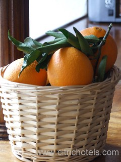Citric Orange