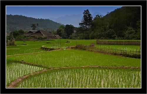 voyage nikon rice vietnam tay marcos riz laichau rizière d700 marco971 thahamlet