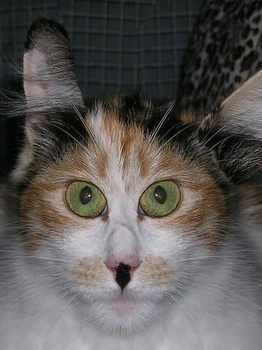 CAT LOOKING AT 3D DSCN6403