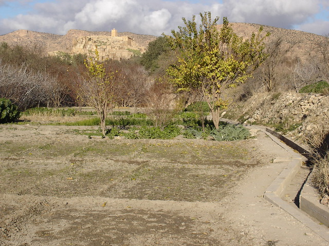 Laghrouss orchards, Beni Farah, 2007