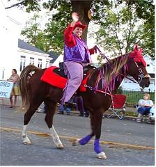 equestrianism, equestrian sport, halter, horse, horse harness,