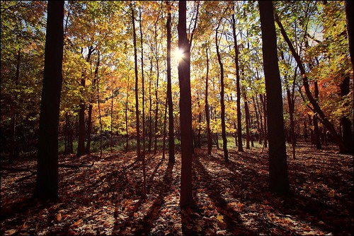 autumn fall nature colors forest illinois midwest explore mywinners artlibre apusphoto