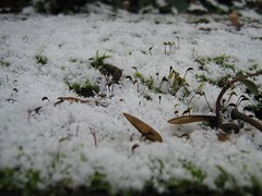More snow on moss