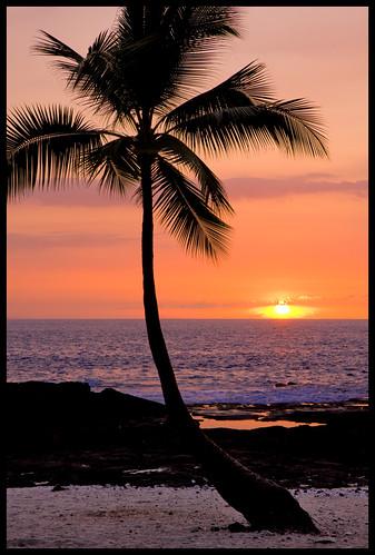 sunset usa silhouette hawaii lava interestingness coconut palm bigisland kona puuhonuaohonaunau placeofrefuge honaunau kaheka