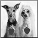 Greyhound Wedding