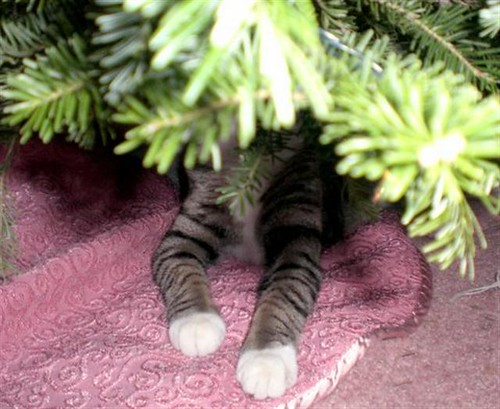 Nope...no kitties under this tree....