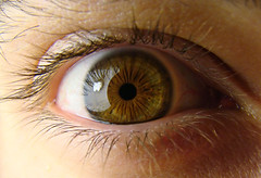 iris, brown, yellow, macro photography, eyelash, close-up, eye, organ,