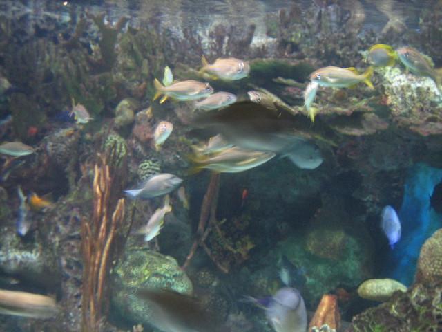 Adventure Aquarium Philadelphia