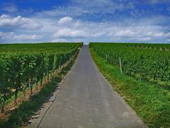 dirt road(0.0), hill(0.0), prairie(1.0), agriculture(1.0), farm(1.0), horizon(1.0), field(1.0), soil(1.0), grass(1.0), road(1.0), crop(1.0), meadow(1.0), rural area(1.0), vineyard(1.0), plantation(1.0),