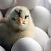 a Chick !~