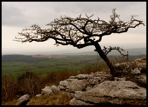 Tree, Hutton Roof.