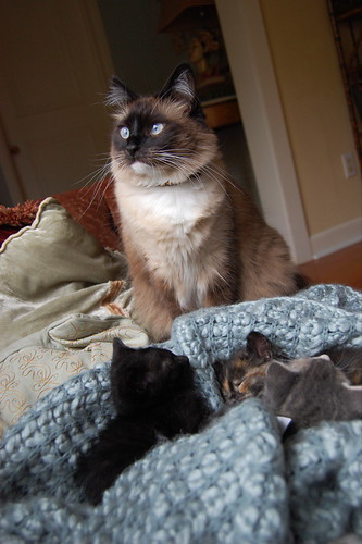 guardian of the kitties