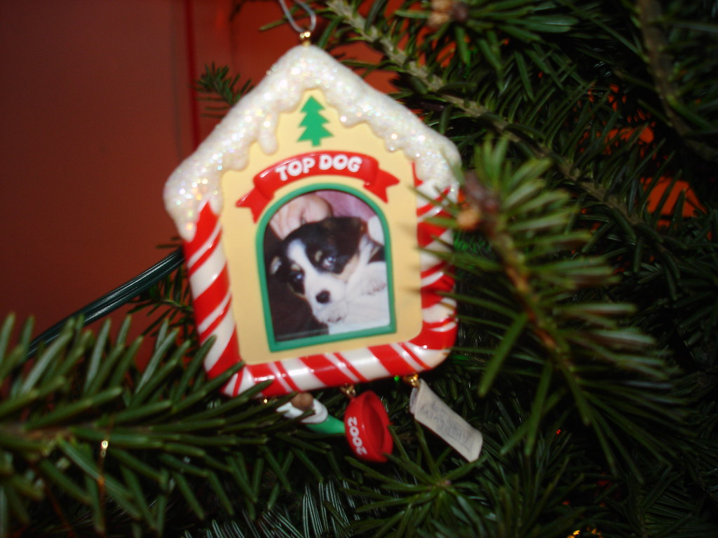 Dogs First Christmas Ornament.Top Dog Ornament From Kovy S First Christmas He S Just A