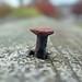 rusty nail by thomas23