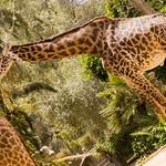 San Diego Zoo 064