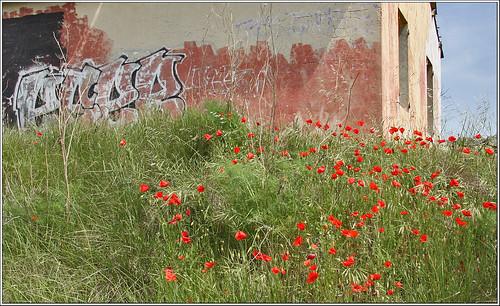 Graffitti and poppies
