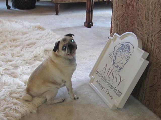 Custom Dog Tags For Human Seal