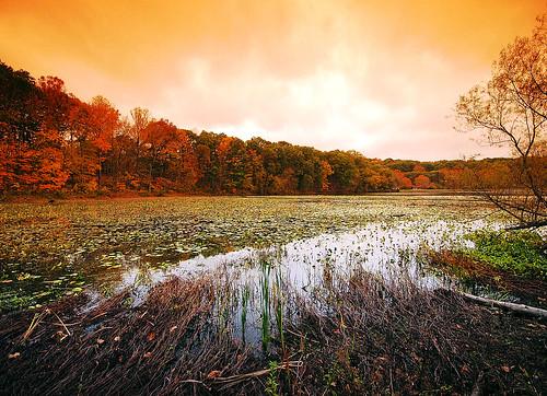autumn ohio fall nature landscape sigma 1020mm ruralohio geotaggedohio lakealma