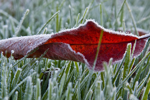 morning november red wallpaper usa ny fall grass leaf frost rochester pittsford 2007 canon40d randomshotsfrost