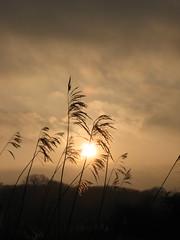 ritec sunset