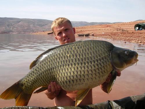 best carp baits