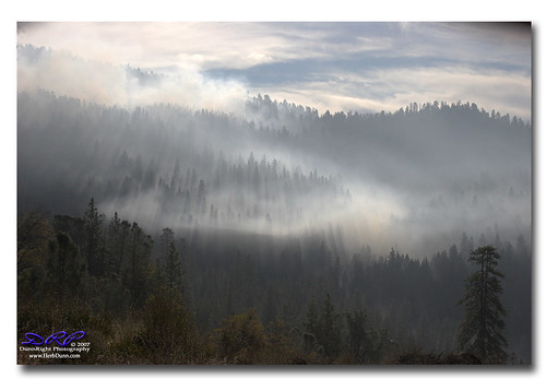 forest canon20d smoke yosemite herbdunn dunnrightphotography