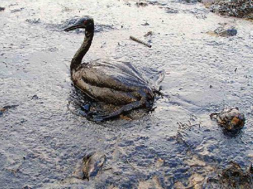 Black Sea Spill