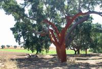 tree_jpg