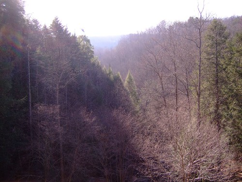 winter mountains nature tennessee pines valley evergreens smokymountains ozonefalls
