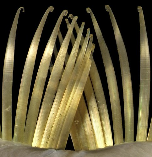 worms feeding filaments by MuseumWales