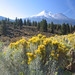 Day 03 - Mt. Shasta & Flowers