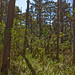 Croatan National Forest