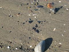 footprint(0.0), sea(0.0), sea turtle(0.0), soil(1.0), sand(1.0), pebble(1.0), rock(1.0), wildlife(1.0),