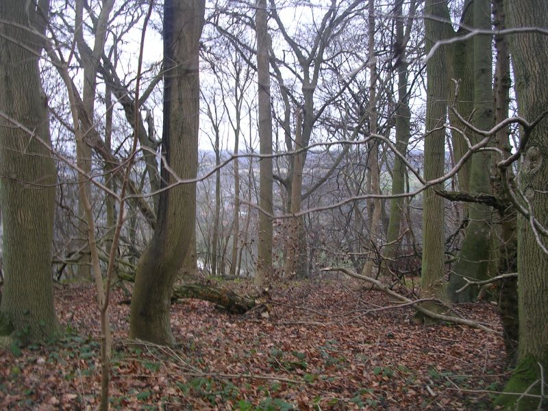 Trees with Goring beyond Goring Circular