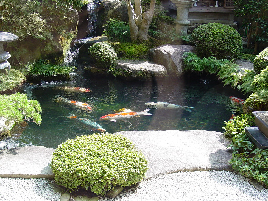 Koi pond in a sweet shop miajima island japan a photo for Japan koi fish pond