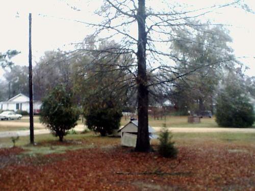trees ice