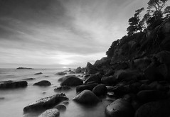 Salt Point State Park, BW