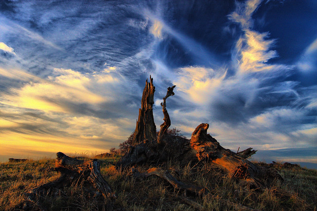 cirrus clouds above deadfall