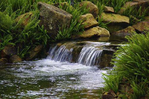 flowers water waterfall may monkeys uganda ferns spekeresort k200d pentaxjjp