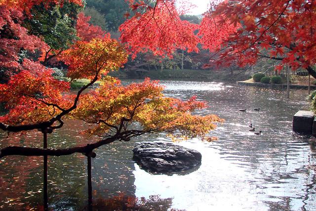 Koishikawa Korakuen Park, North of downtown Tokyo, close to the Tokyo Dome