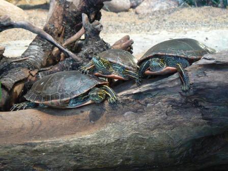 Duluth Aquarium Explore Minnemom 39 S Photos On Flickr